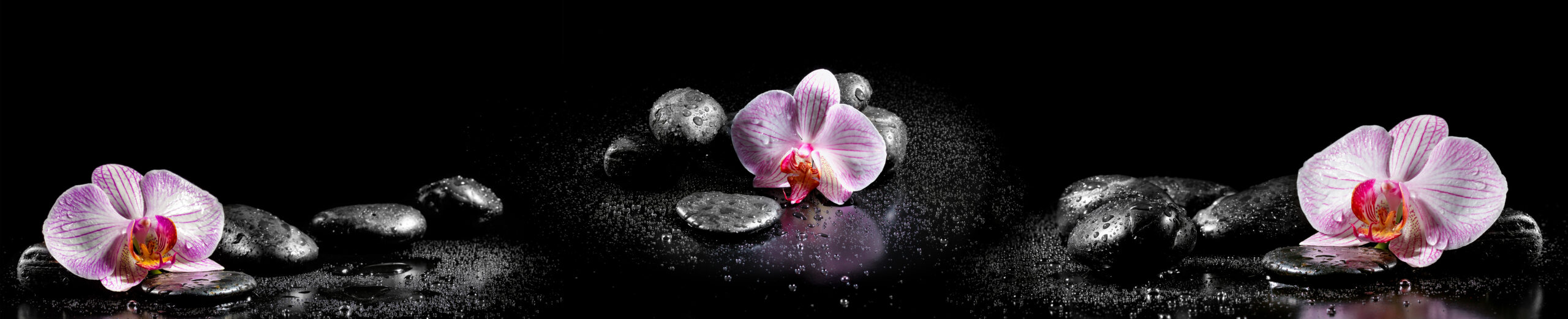 Horizontal panorama with pink orchids and zen stones on black background